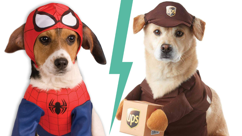 Super Cute Halloween Costume Ideas For Dogs 10 Pics