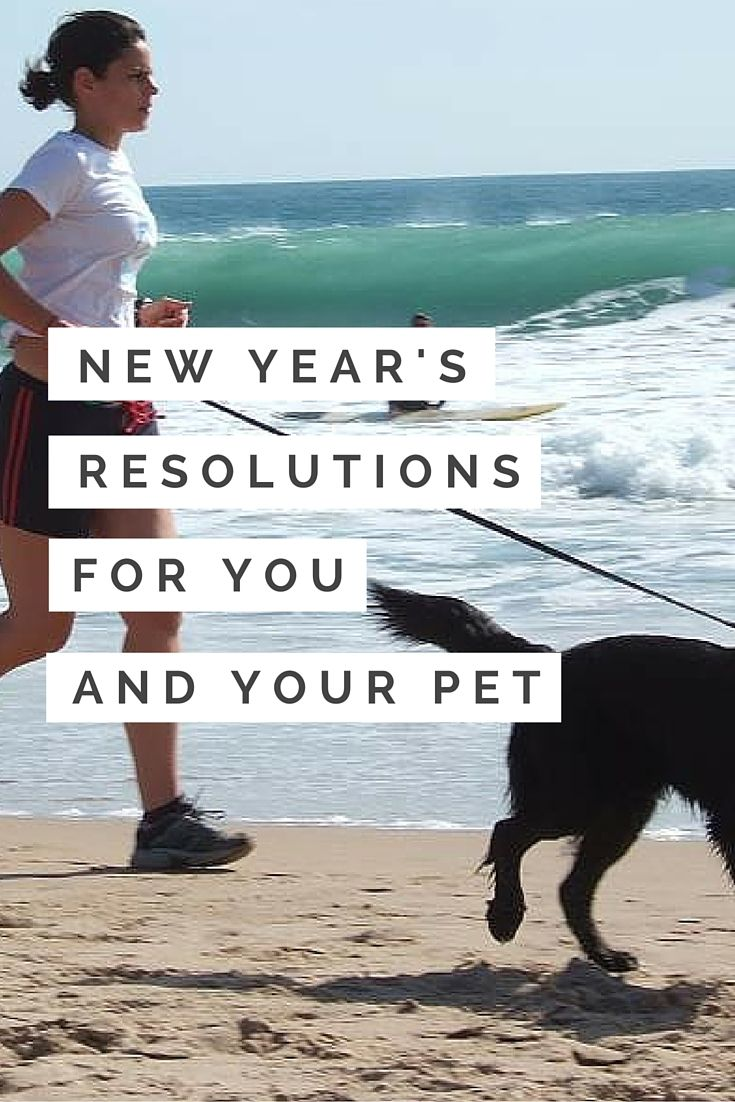 New Year S Resolutions For You And Your Pet Pets Your Pet Pet