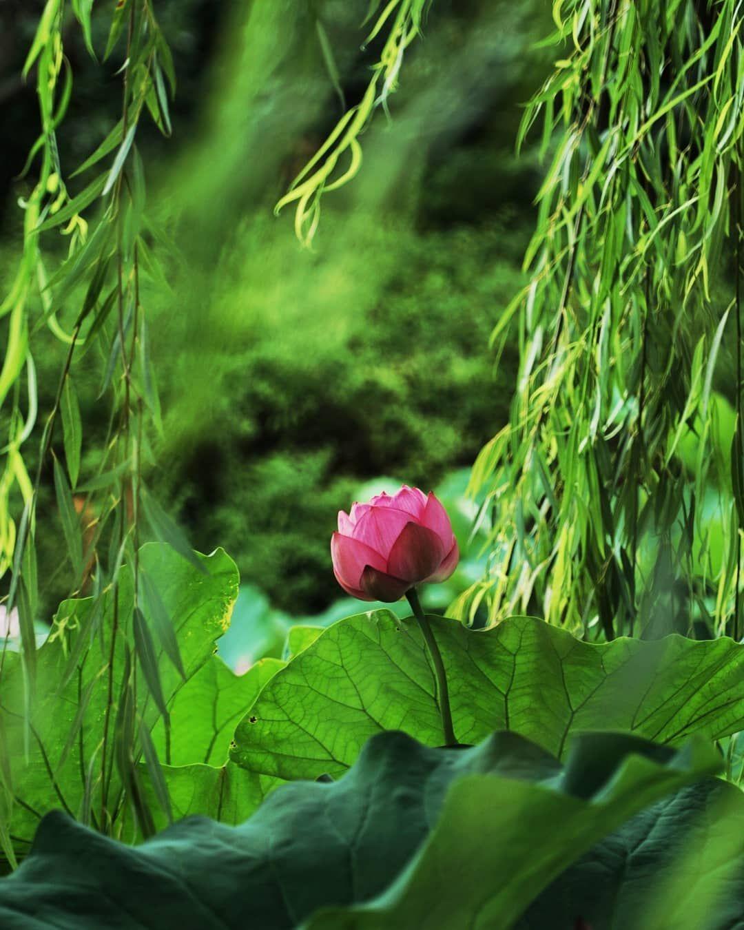 教王護國寺 東寺 Plants Flowers Instagram