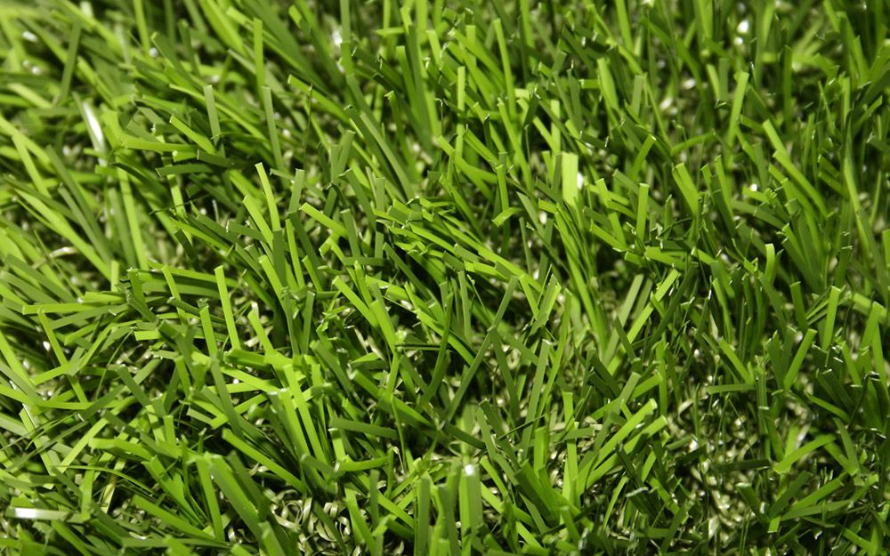 Centipede Grass In 2020 Types Of Grass Grass Seed Types Drought Resistant Grass
