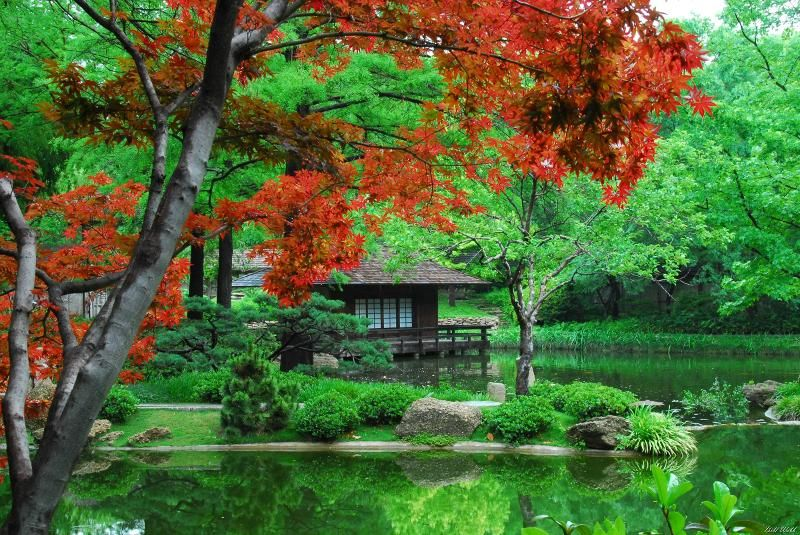 japanese gardens fall festival | jinbeh in lewisville texas fort ...