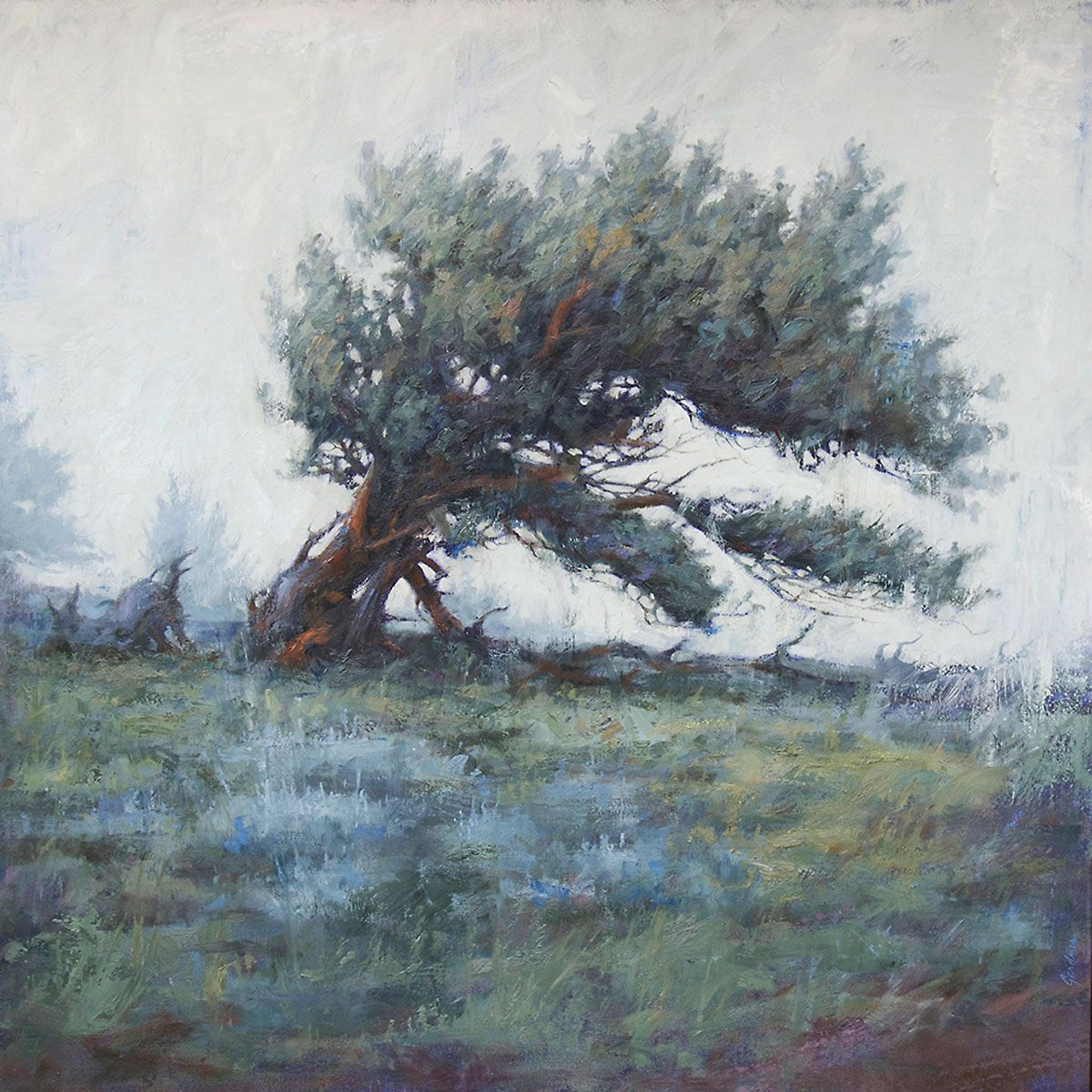 Bristlecone in Blue – Terry Gardner   Ann Korologos Gallery