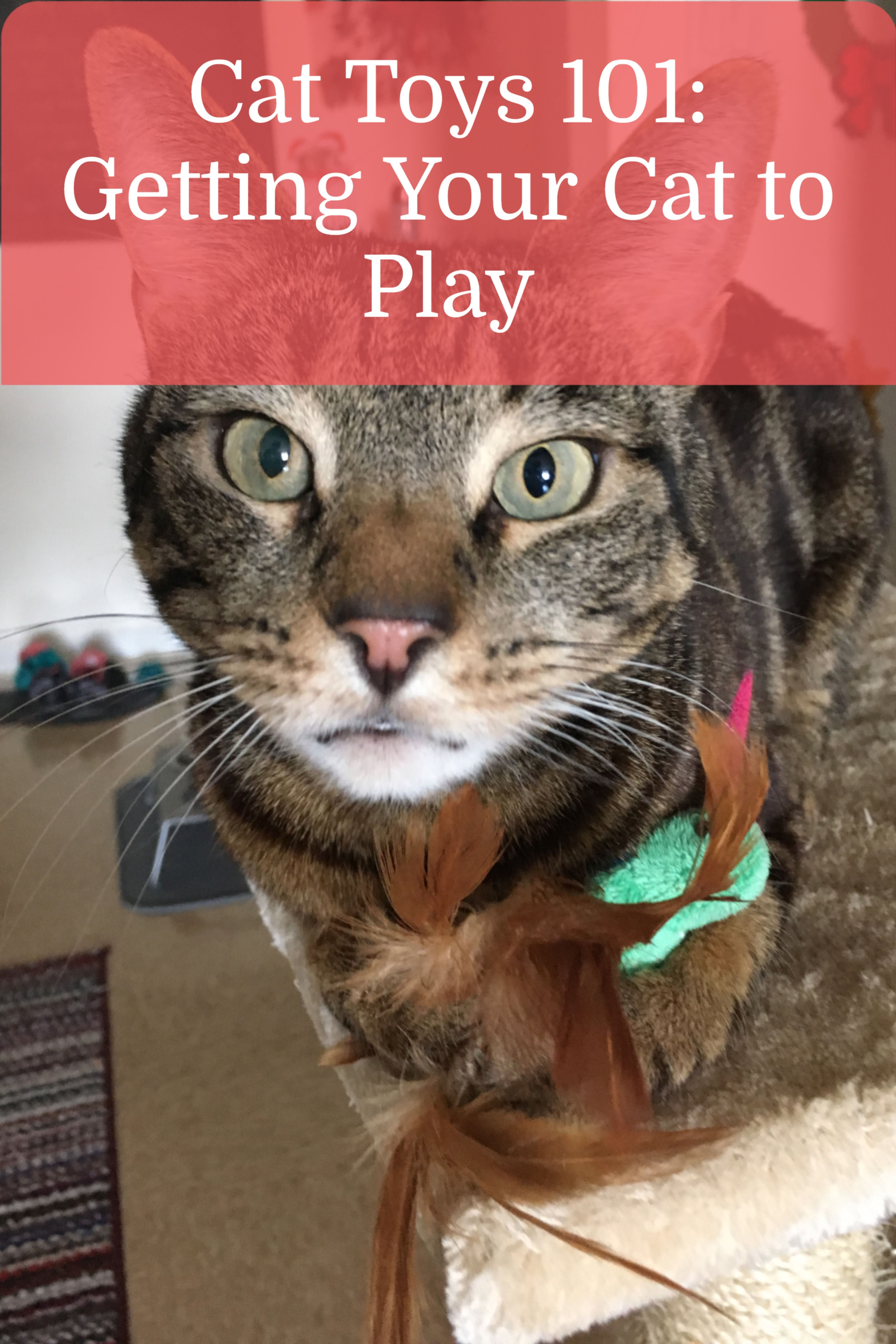 My Cat Isn T Interested In Playing Try These 9 Simple Hacks Caticles In 2020 Cat Toys Cats Kitten Care