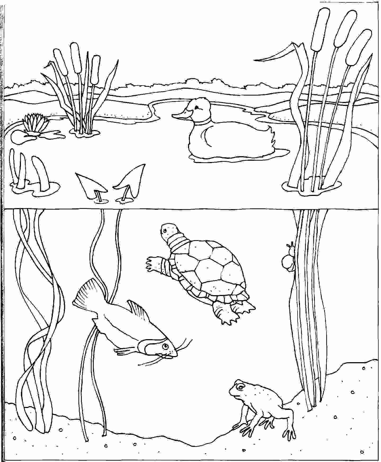 Water Cycle Coloring Page Inspirational Coloring Pages