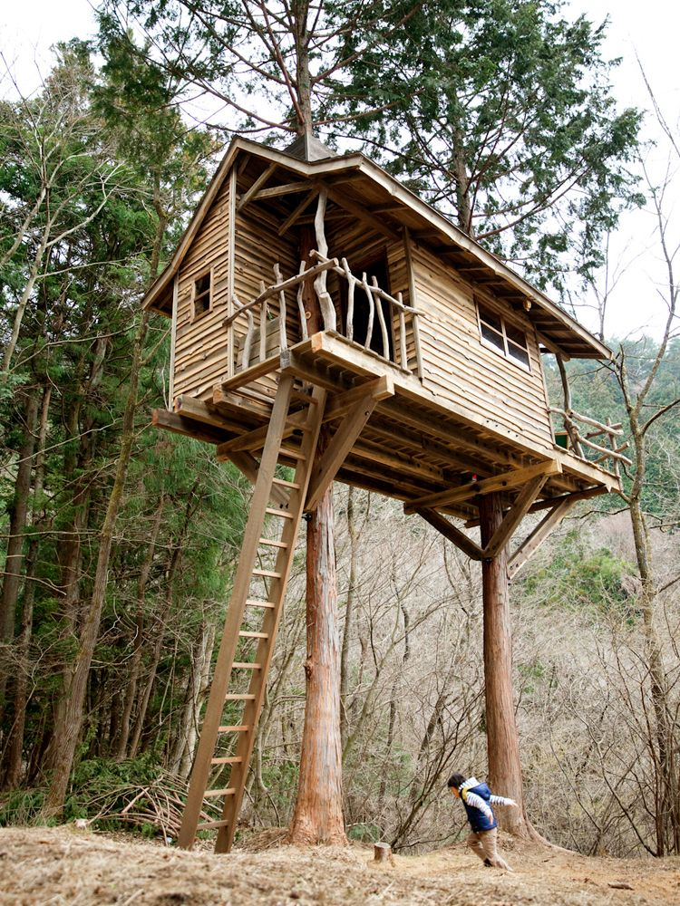 An amazing two tree treehouse with rustic ship lap siding for Tree house ideas plans