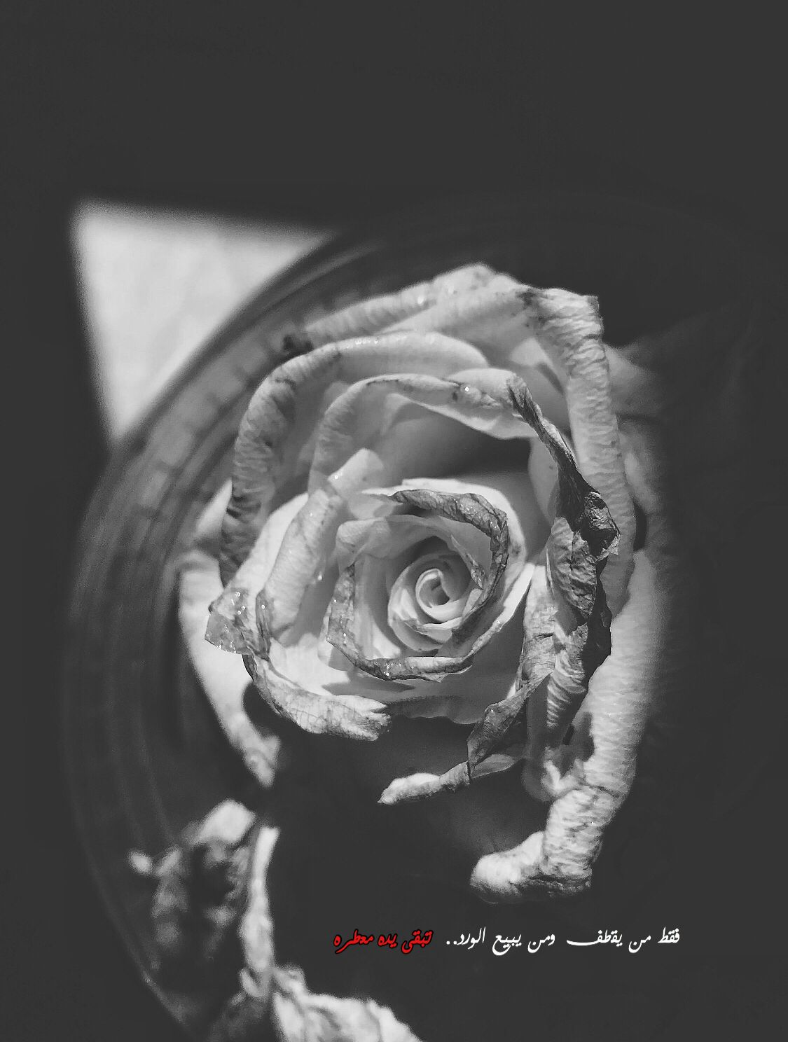 Flowers Photography Quotes ورد اقتباسات تصميم مساء رمزيات Cool Words Words