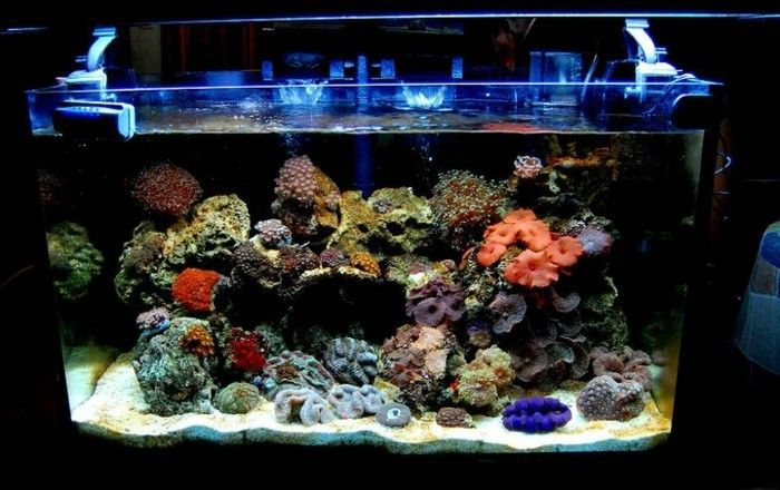 aquarium einrichtung korallen aquarium einrichtung sand blaues licht aquarium deko lifestyle. Black Bedroom Furniture Sets. Home Design Ideas
