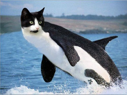 Image result for funny tuxedo cat