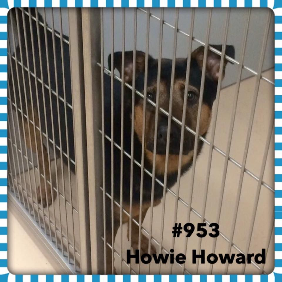 TO BE DESTROYED 05/04/17 ***REASON SPACE*** ️HOWIE ️ 3
