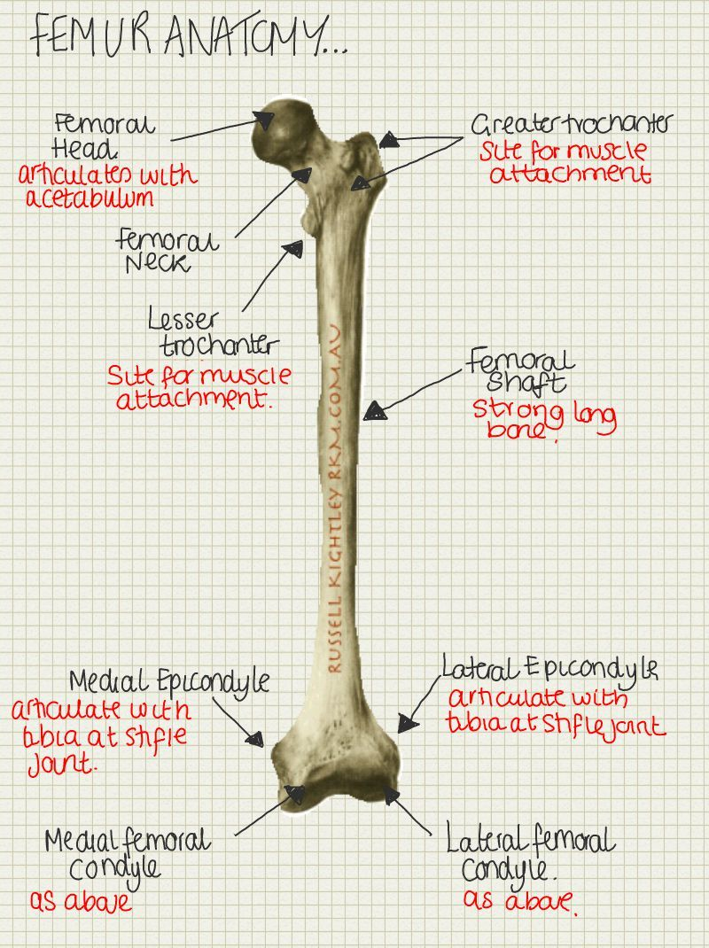 A place to find hints, tips and ask questions. | Osteomioarticular ...