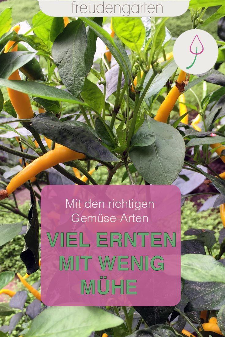 Pflegeleichtes Gemüse im Garten und auf dem Balkon anbauen | Gemüse anbauen, Gemüse pflanzen, Garten