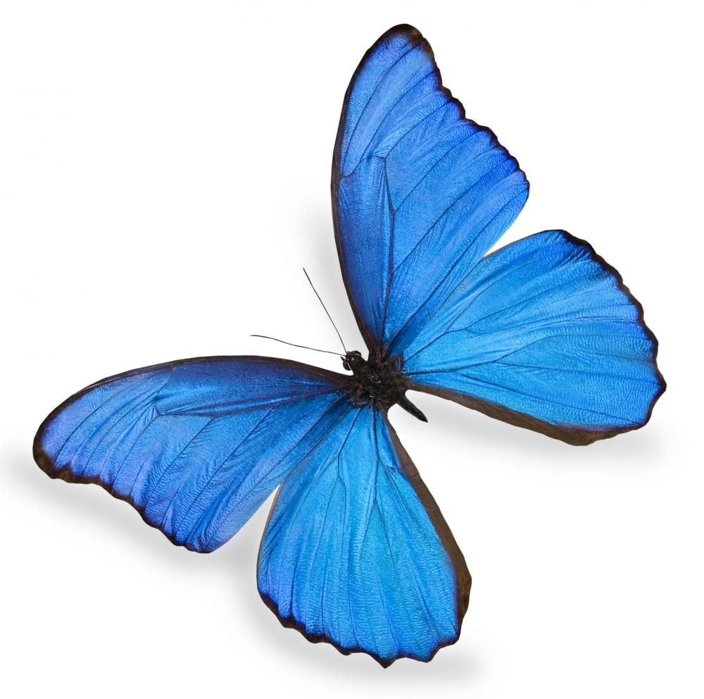 The Social Butterfly Effect Butterfly Effect Blue Butterfly