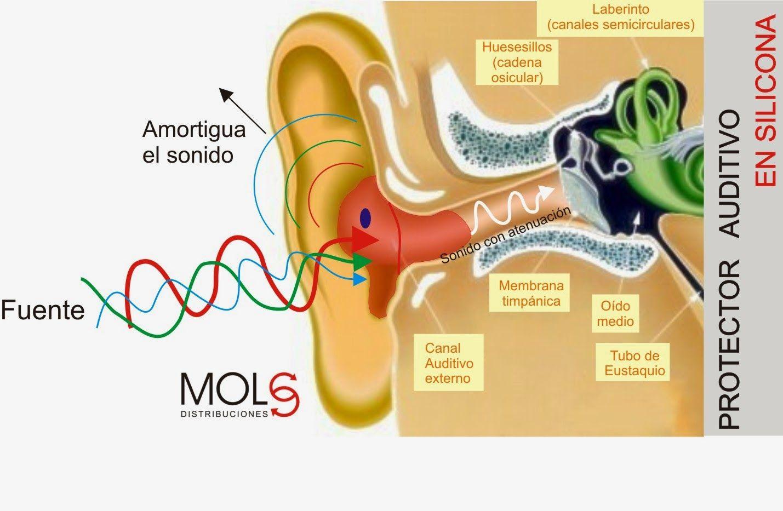 PROTECCIÓN AUDITIVA: Como atenúa el protector auditivo en silicona ...