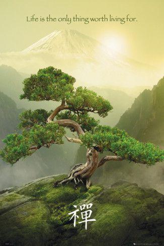 Poster Nature morte zen