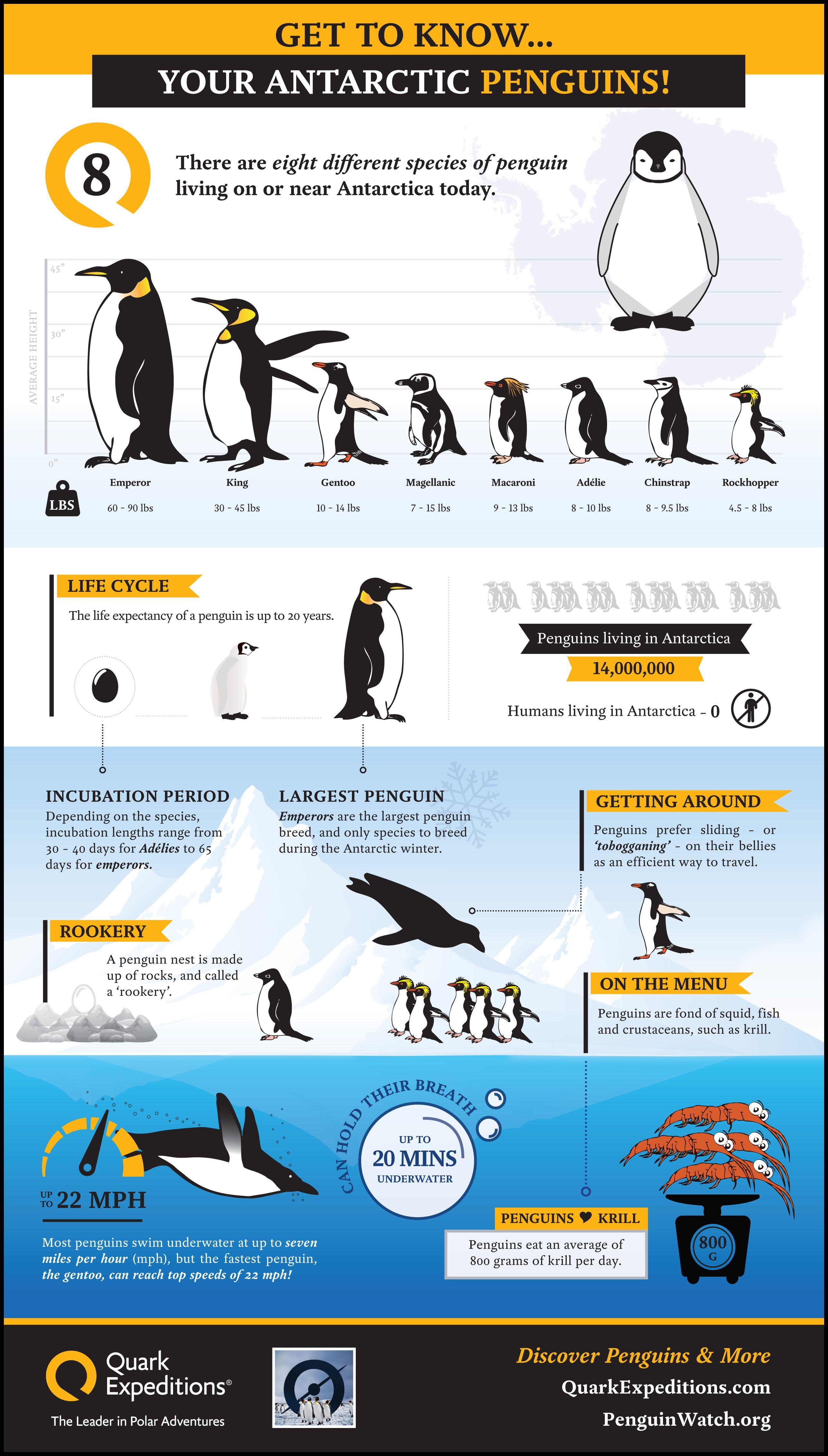 Penguin Fun Facts