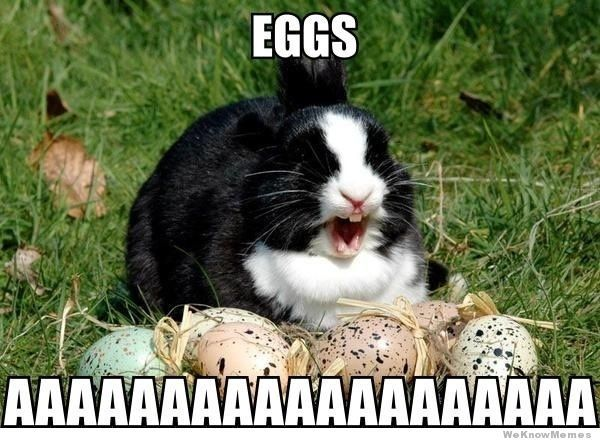 d30ba330d474016b1cf3beb292b25e3f funny animal memes here are the 10 funniest easter memes! happy,Happy Birthday Easter Meme