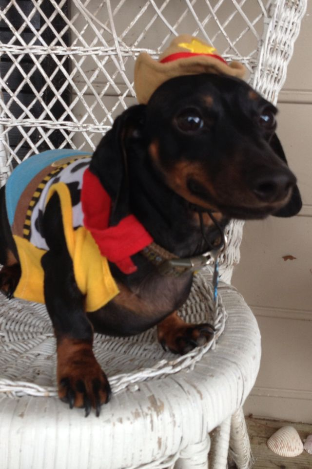 Andy There S A New Sheriff In Town Dachshund Woody Toy Story
