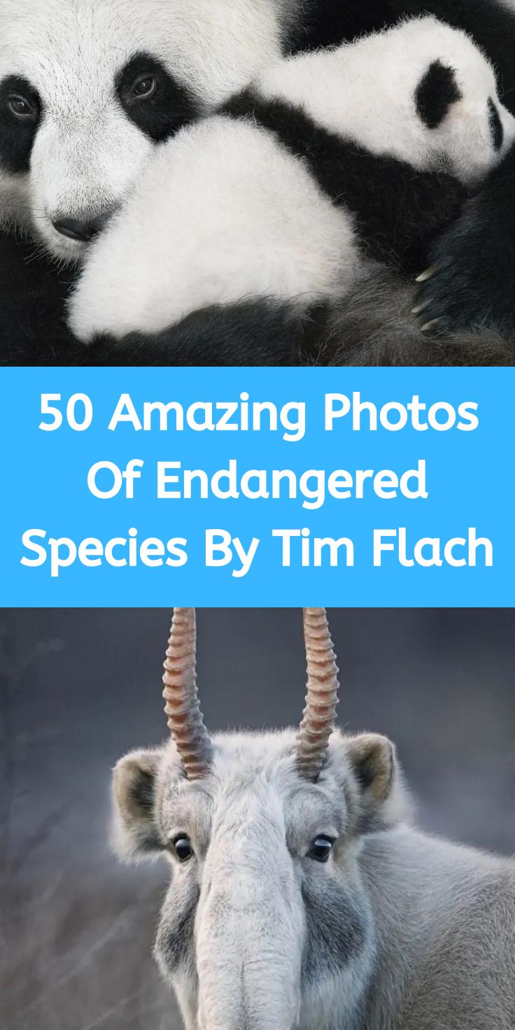 Pin by X41 K15 on Dinobook in 2019 Extinct animals