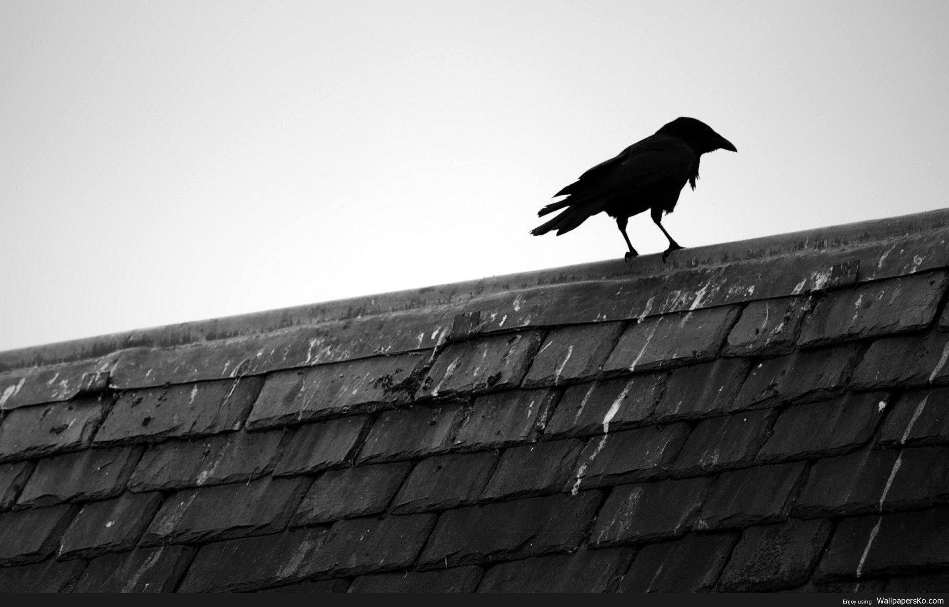 Raven Hd Wallpaper Http Wallpapersko Com Raven Hd Wallpaper Html Hd Wallpapers Download Black And White Birds Black Bird Bird Wallpaper