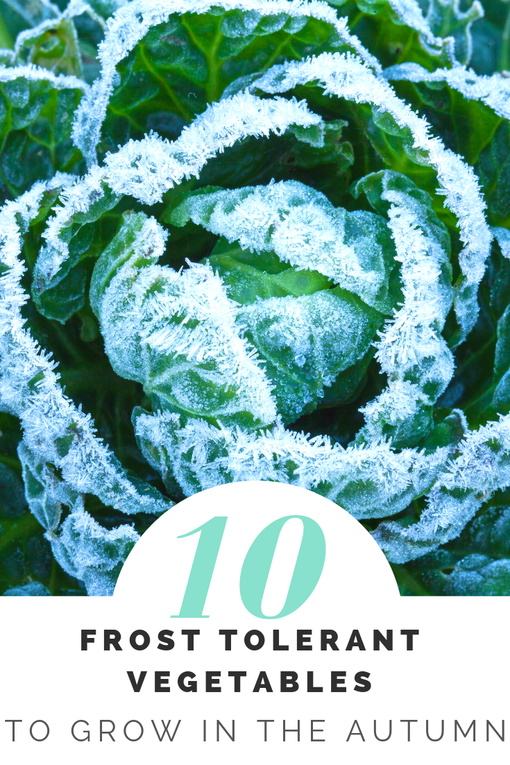 10 Frost Tolerant Vegetables To Grow In Fall Fall 400 x 300