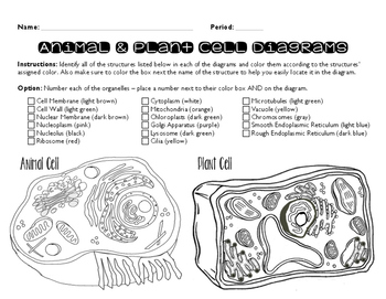 Plant And Animal Cell Coloring Page Plant And Animal Cells Animal Cell Coloring Pages