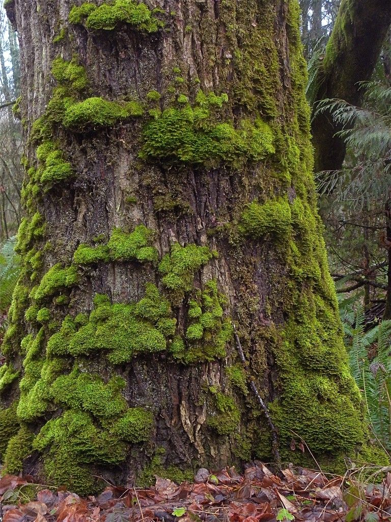 How To Get Rid Of Moss On Plants Mossy Tree Plants Tree Textures