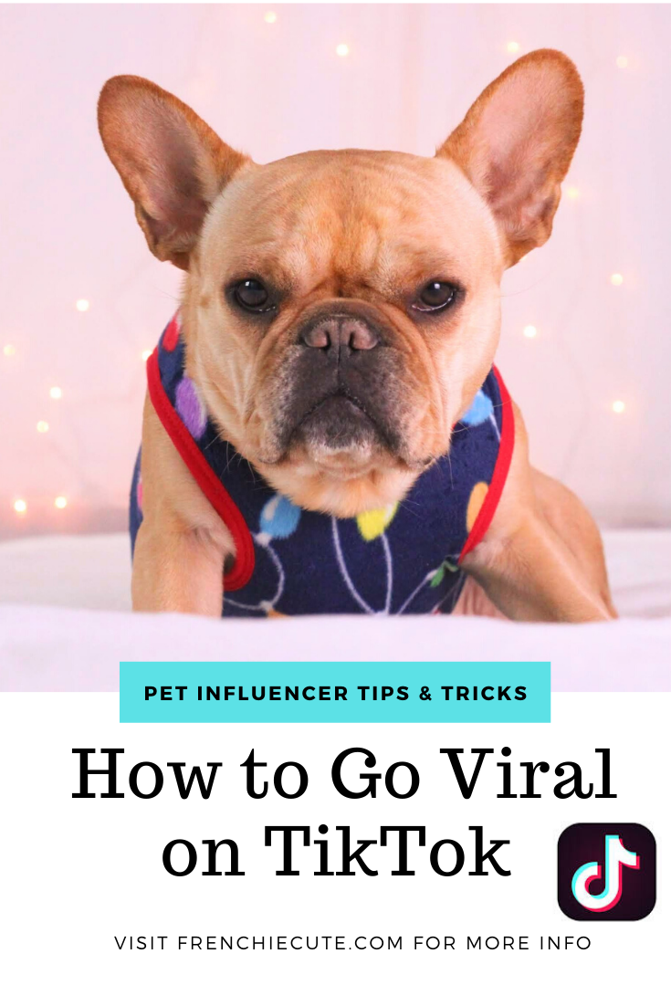 Quick Actionable Tips To Go Viral On Tiktok Viral Dog Photography To Go