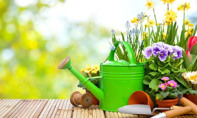 Das sind die besten Gartenpflanzen für Allergiker