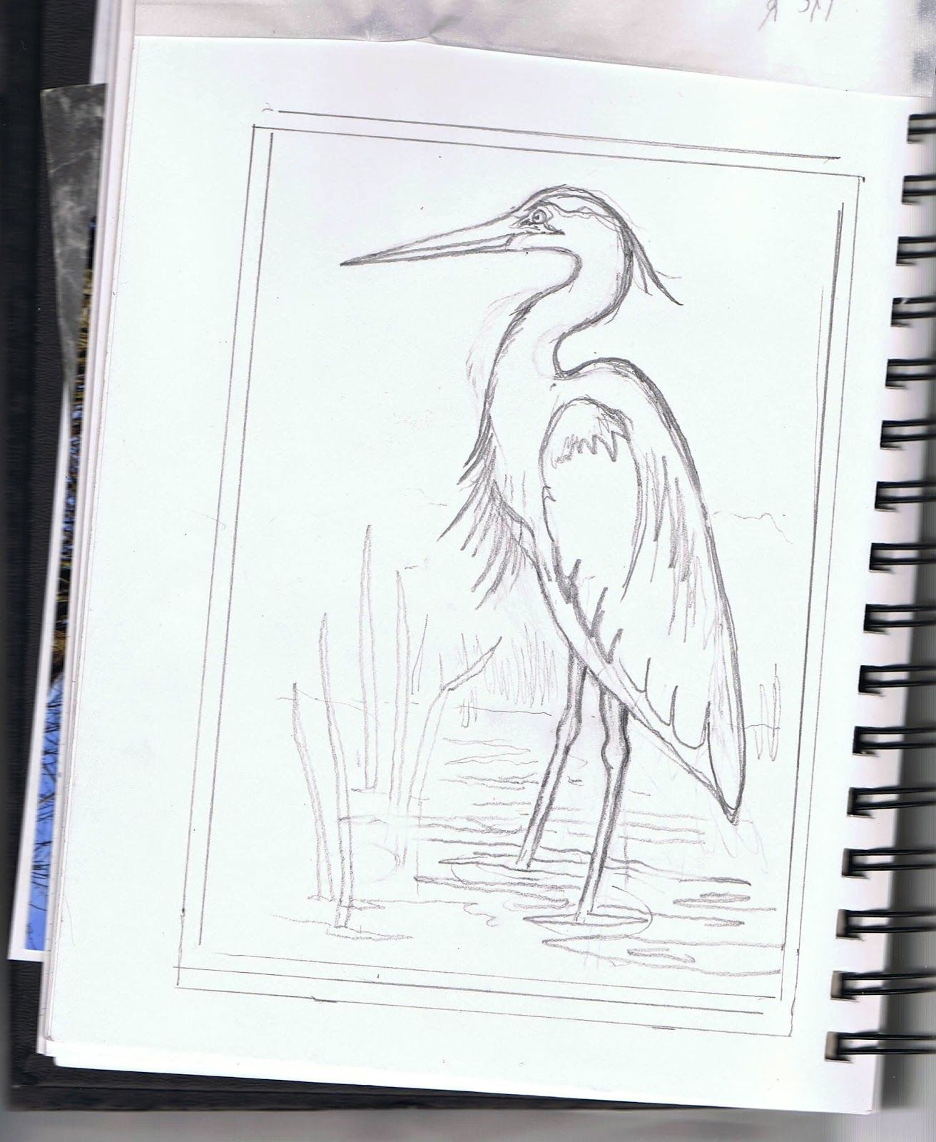 Great Blue Heron By Jane Grant Tentas Bird Drawings Heron Art Pelican Drawing