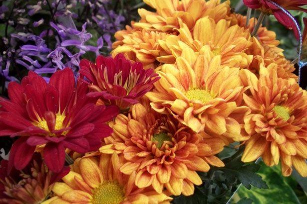 Pin Em Flores De Vaso Ou De Corte