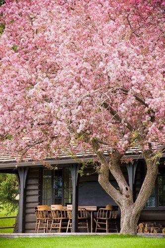 Ohh Wow Flowering Trees Beautiful Tree Blossom Trees