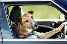 Going away with your pet? Check here for the tips!