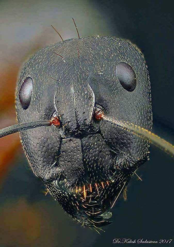 رأس النملة تحت المجهر الألكتروني Macro Photography Insects Macro Photography Tips Beautiful Macro Photography