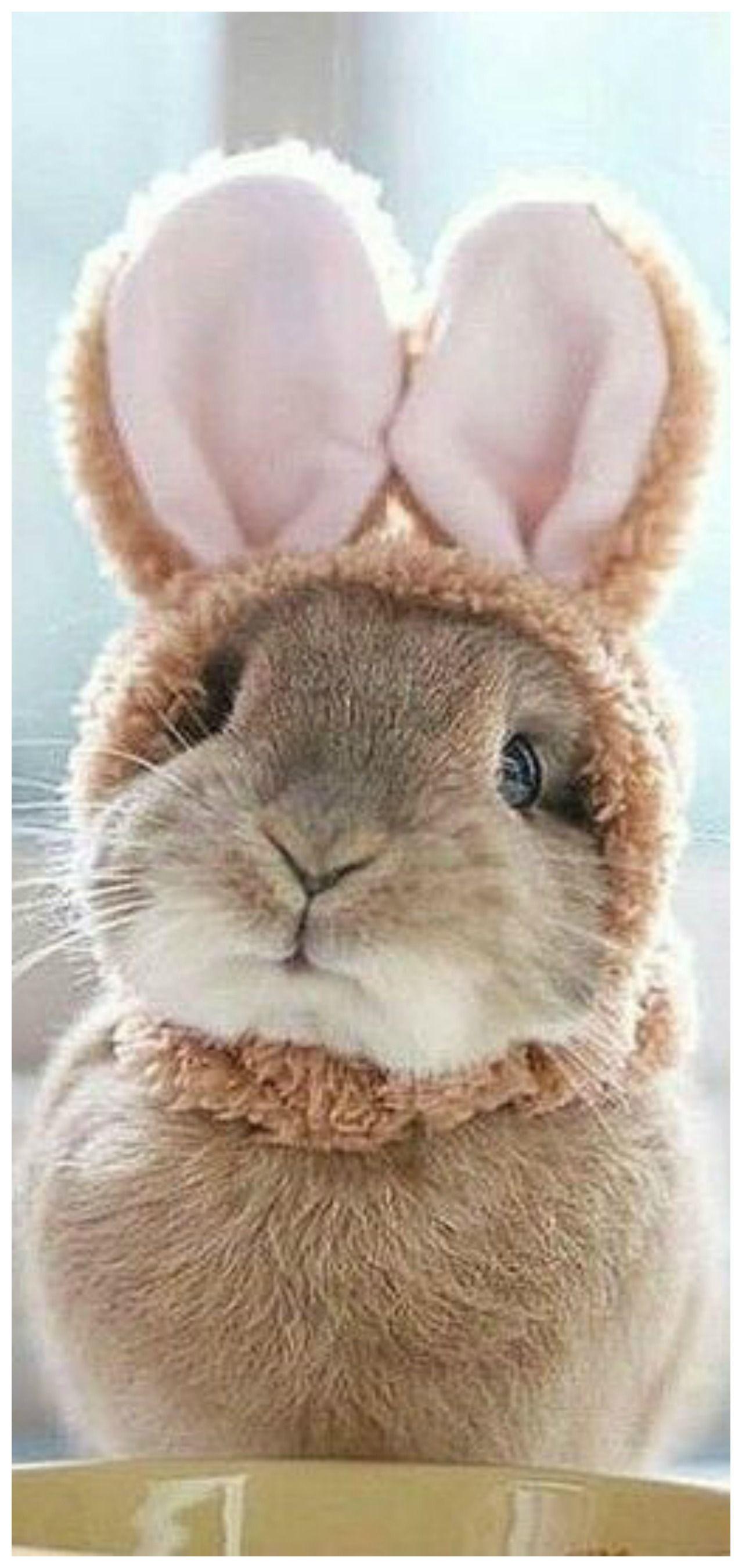 Foto 4 Susse Teddy Widder Baby Kaninchen Vom Zuchter Baby