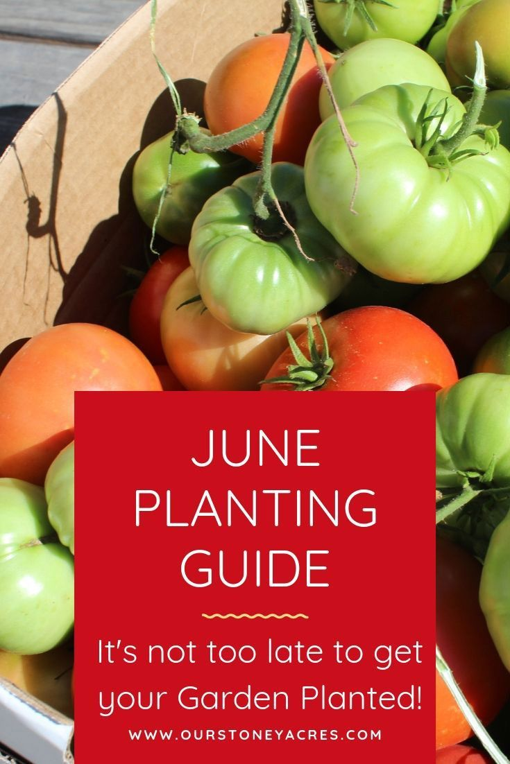 June Planting Guide It S Not Too Late To Plant Fall 400 x 300