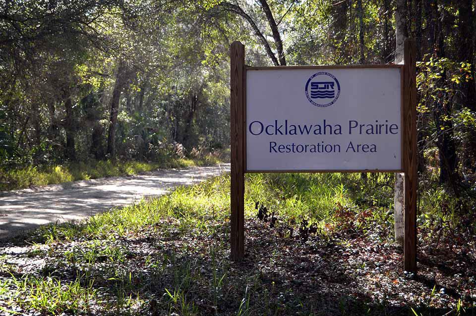 Ocklawaha Prairie Restoration Area Hiking Trails Hiking