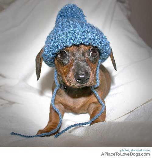 My Name Is Popcorn Cute Animals Dachshund Love Animals