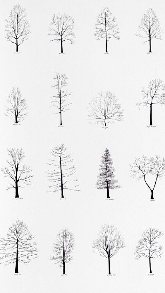 Aesthetic Tree Drawing : aesthetic, drawing, Tattoo, Drawing,, Drawing, Simple,, Flower, Drawings