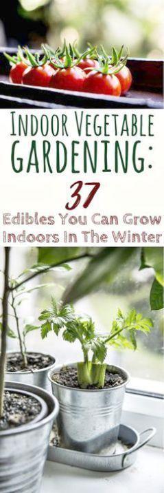 Blumengarten Tipps für Anfänger. Gartentipps für Neulinge bei der Gartengestaltung …   – indoor garden design
