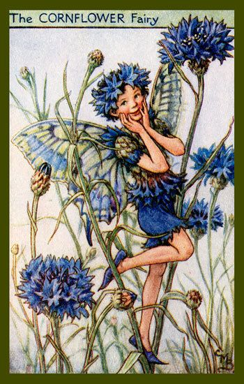 Olde America Antiques | Quilt Blocks | National Parks | Bozeman Montana : Cicely Barker Fairies - The Cornflower Fairy