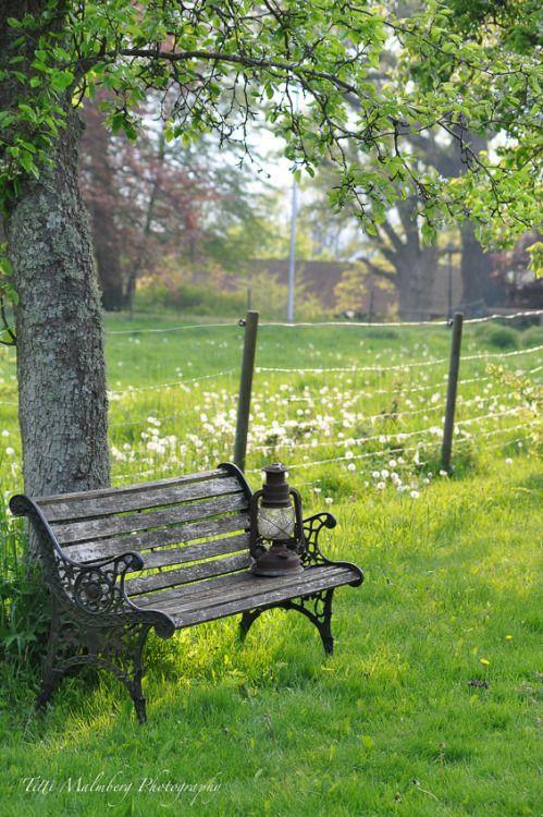 Serene Outdoor Park Old Lanterns