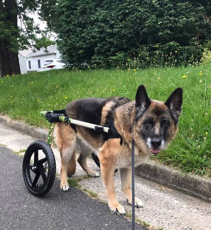 Pin On Diy Dog Wheelchair