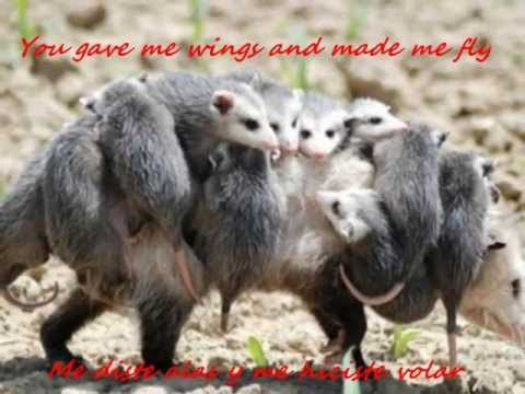Because You Loved Me Celine Dion Spanish English Lyrics Http Youtu Be Fji1ej8mpo8 This Is Just So Sweet Cute Animals Funny Animal Pictures Animals