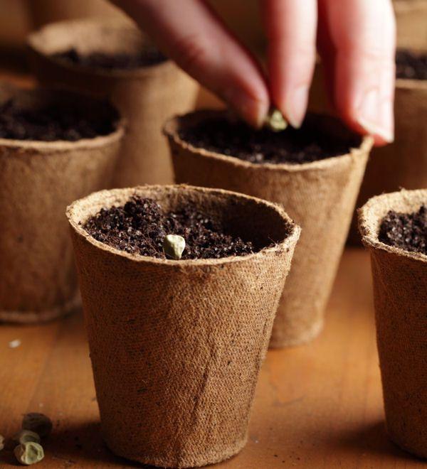 r ussir vos semis des astuces de grand m re pour entretenir votre jardin linternaute jardinage. Black Bedroom Furniture Sets. Home Design Ideas