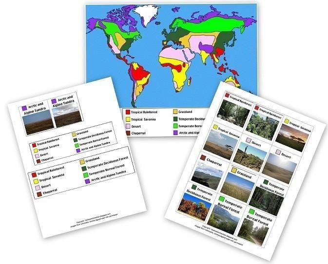 Montessori Animales en todo el mundo Montessori Materiales - best of tabla periodica en blanco para rellenar online