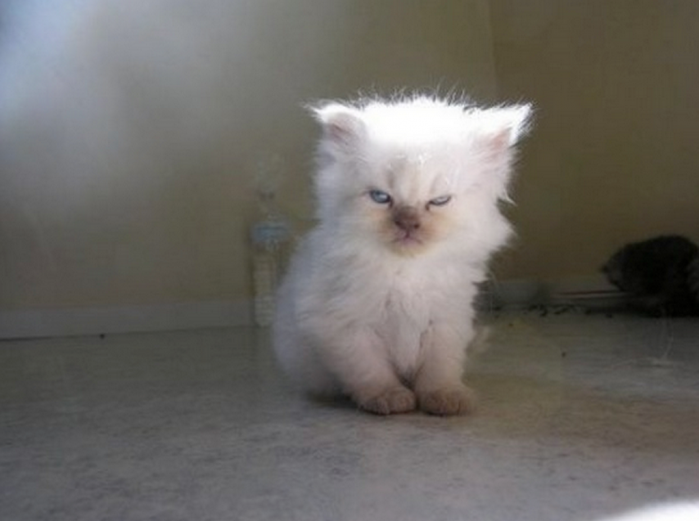 18 Monday Struggles as Told by Kittens