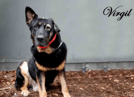 An Eight Year Old German Shepherd Referred To By Volunteers At The North Central Shelter In Calif Animal Shelter Animal Shelter Quotes The Shelter Pet Project