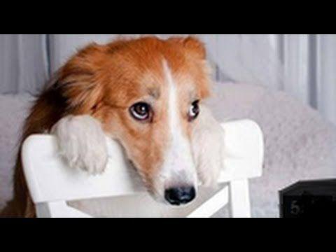 lustige hunde videos zum totlachen s e hunde filme. Black Bedroom Furniture Sets. Home Design Ideas