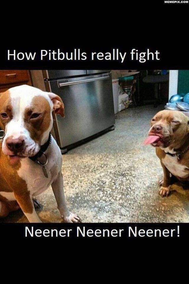 How Pitbulls Really Fight Funny Dogs Animal Captions Funny