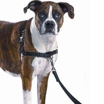 Premier Easy Walk No Pull Dog Harness Black Medium Dog Collars